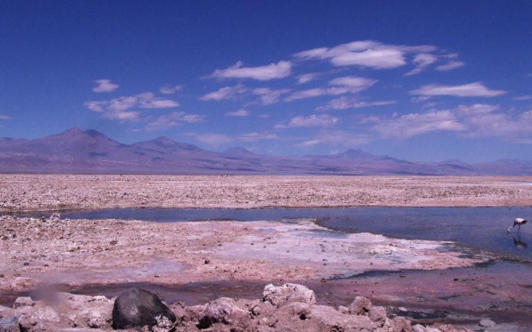 Tour Lagunas Altiplánicas San Pedro de Atacama Chile
